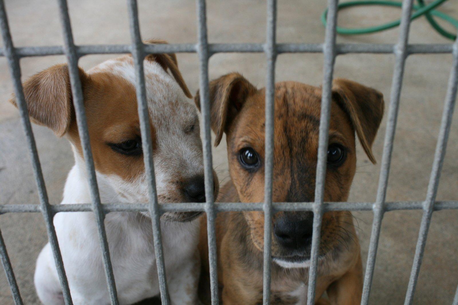Karanténní stanice jako koncentrační tábor pro psy