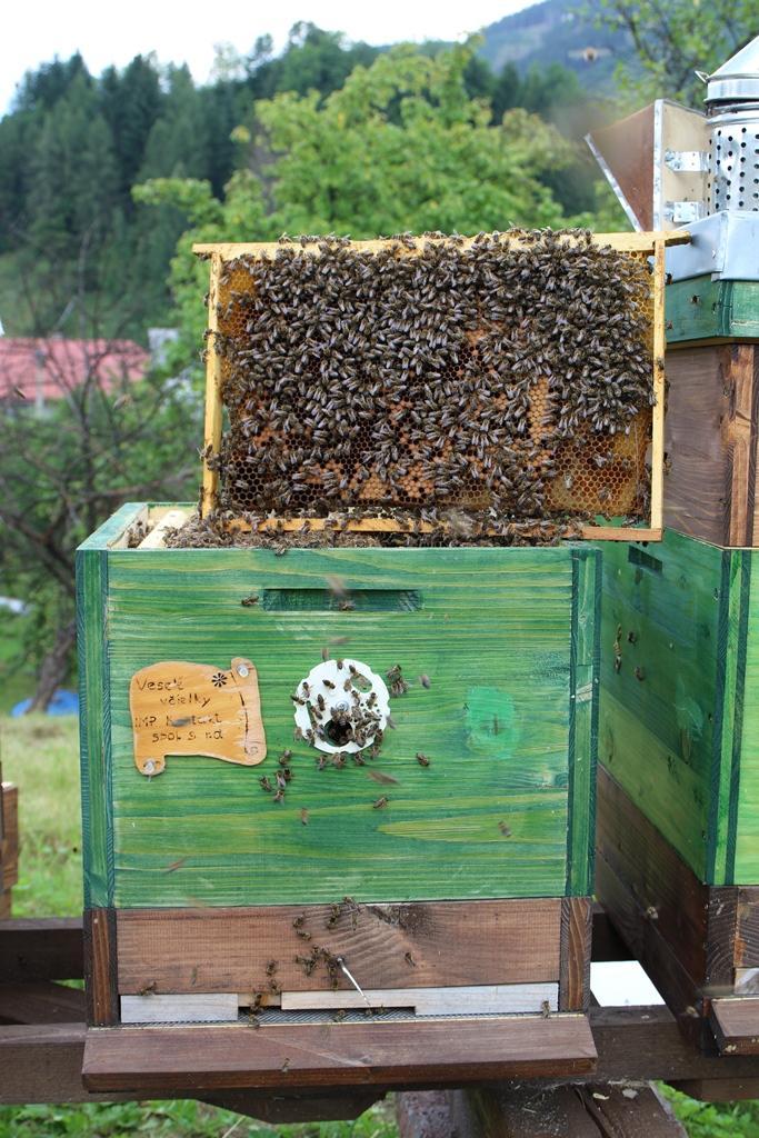 Jak se daří naší včelami rodince na Liptově?